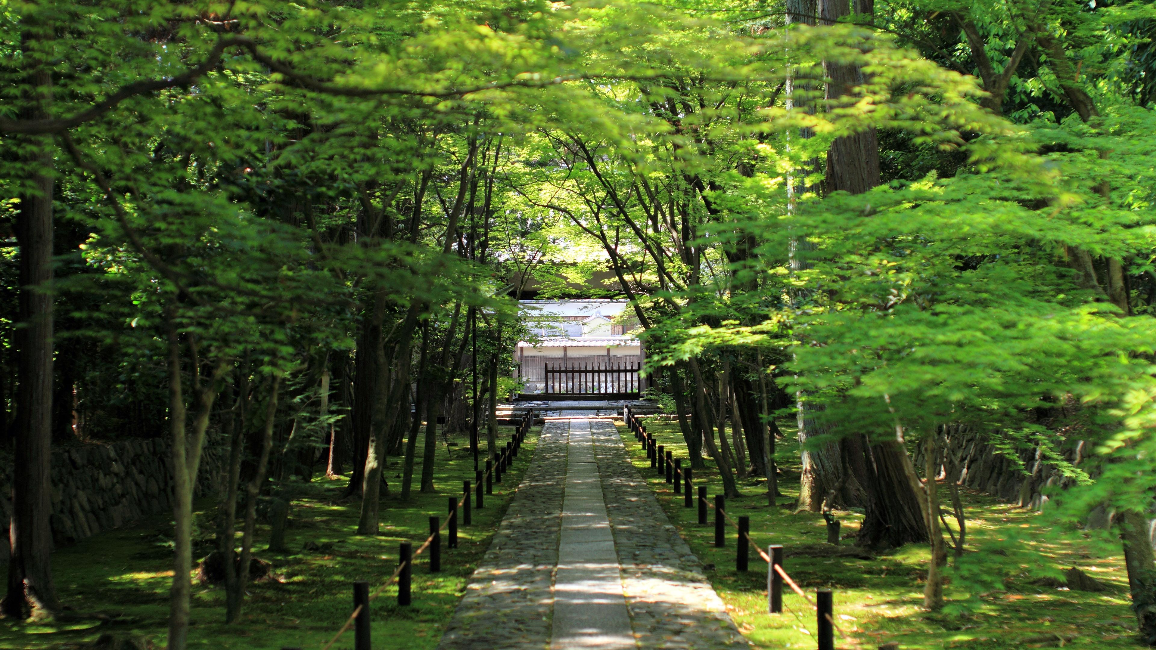 4k 12年 新緑 濃緑の京都壁紙その3 計11枚 壁紙 日々駄文