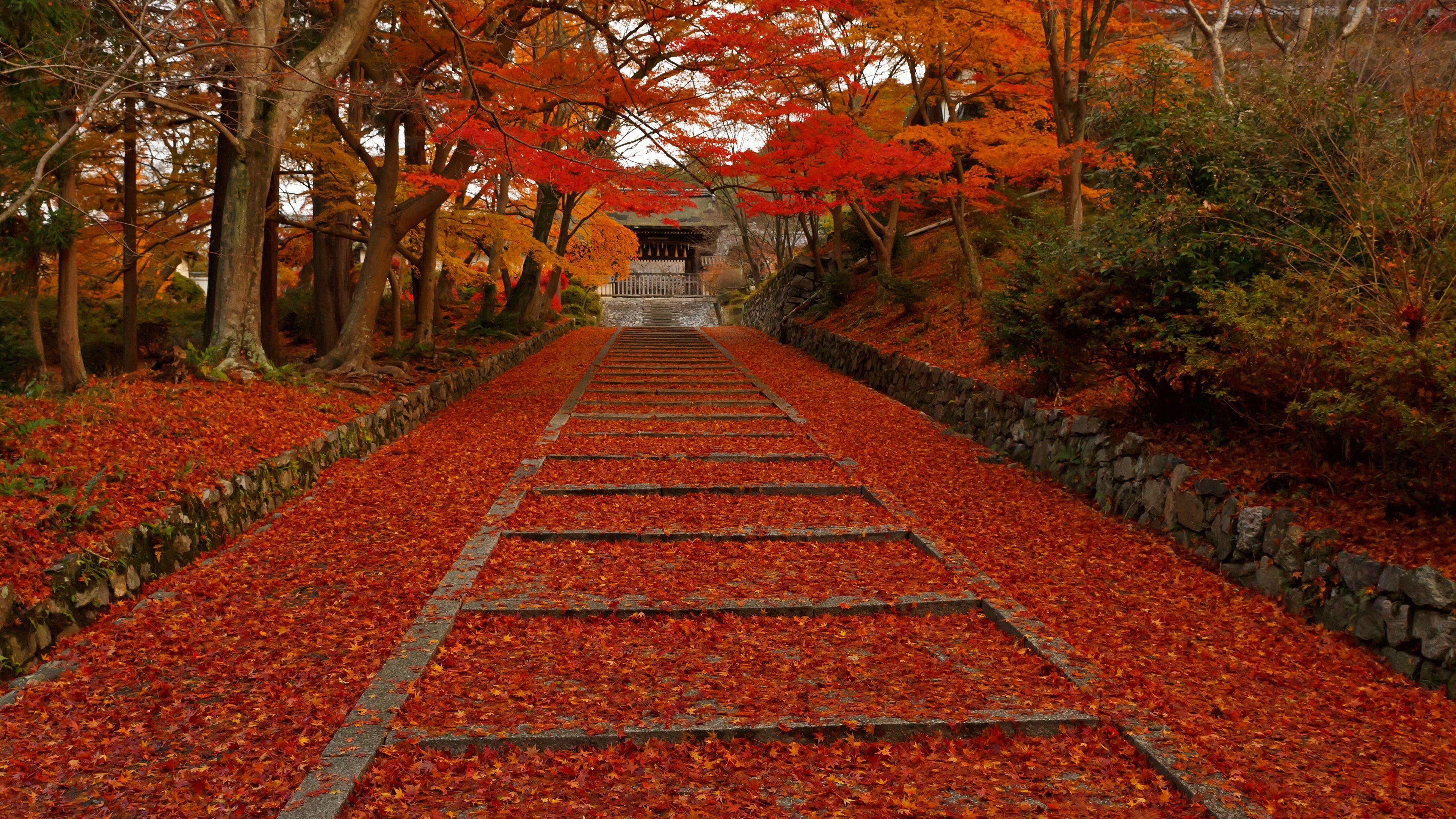 2012年に撮影した紅葉の京都壁紙その14です。