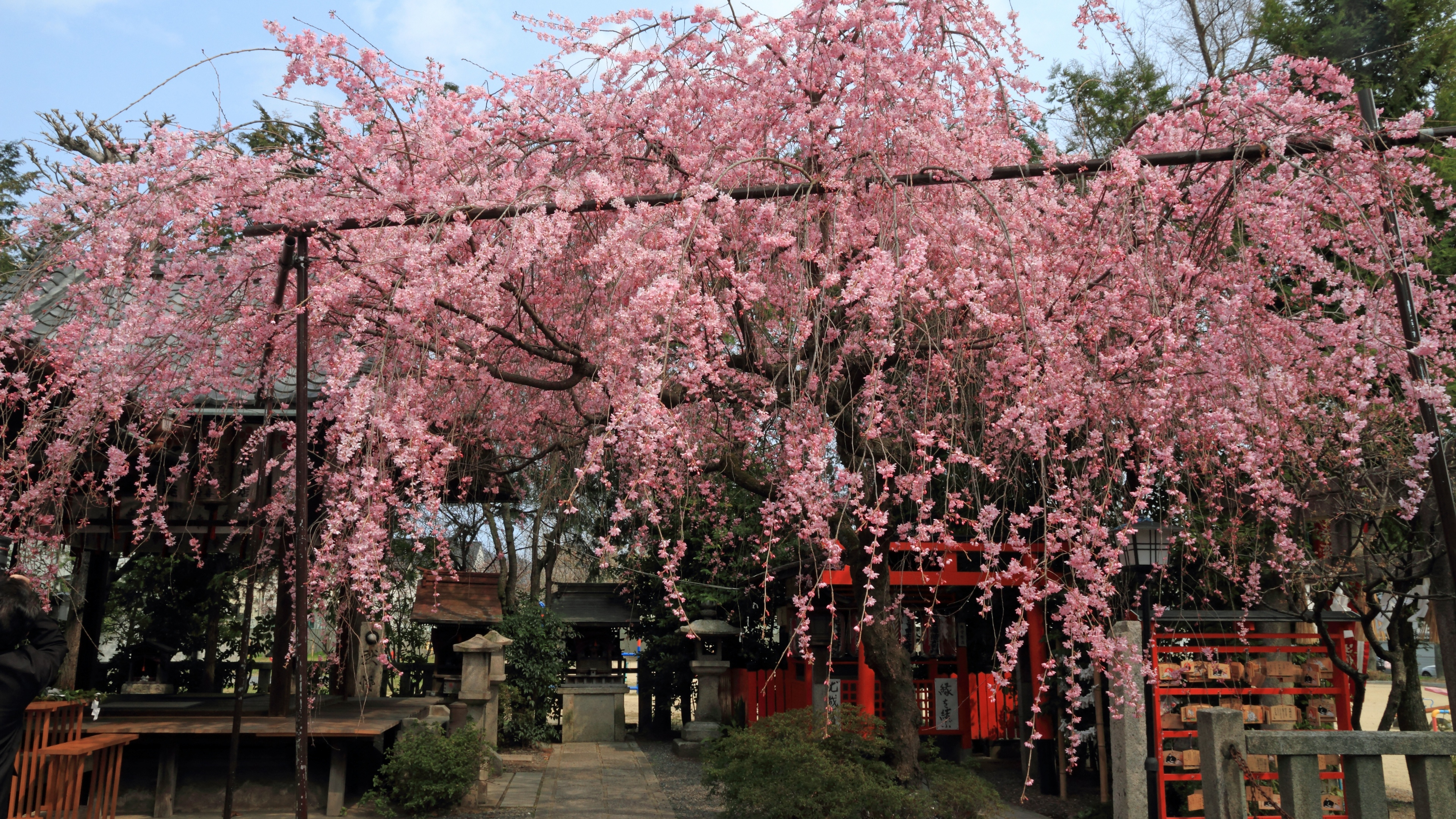 4k 11年 京都の桜壁紙 計10枚 壁紙 日々駄文
